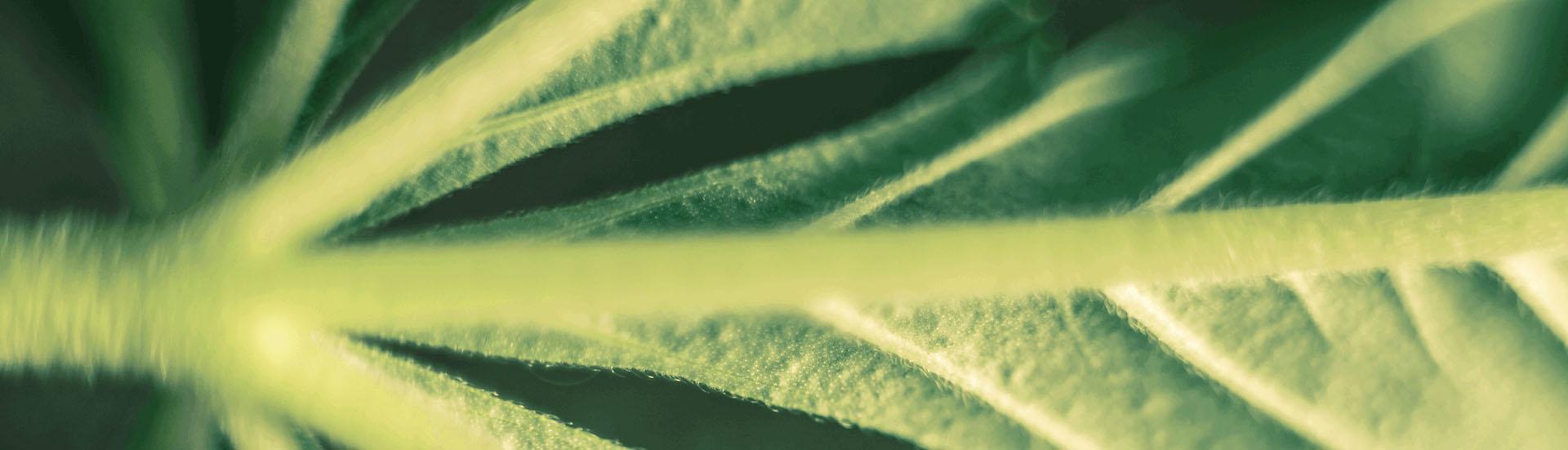 Close up of leaf